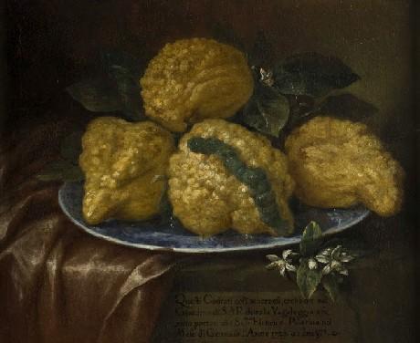Il pittore Bartolomeo Bimbi in mostra a Torino