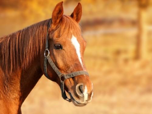 le origini del cavallo