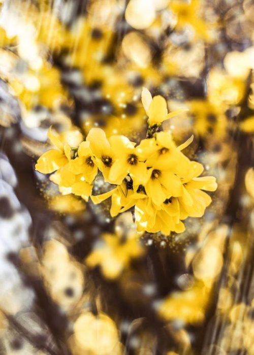 primavera foto artistiche
