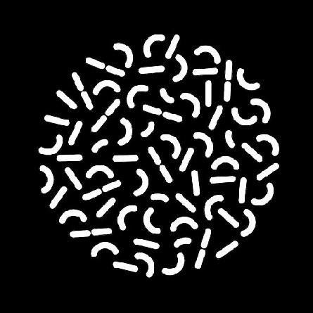 L'arte di Silvia Argiolas allo Spazio Microba di Bari