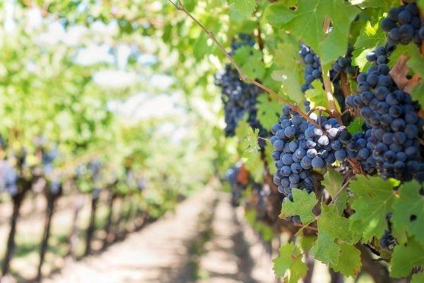 nascita del turismo del vino in italia