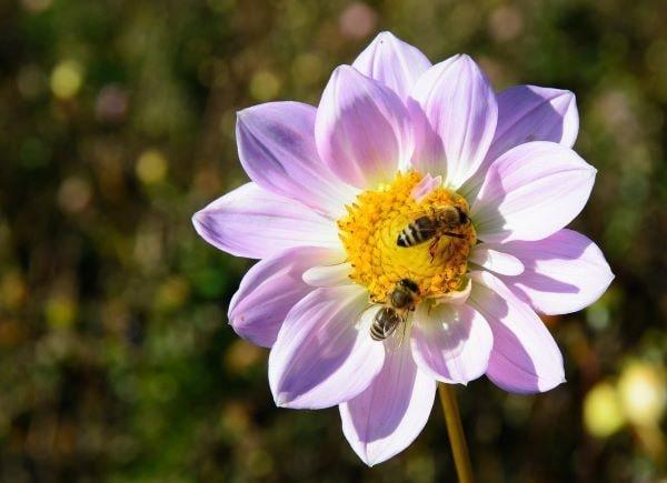 la via delle api
