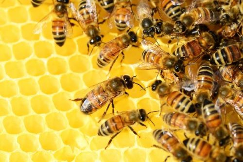 Read more about the article Le api e il loro mondo in mostra a Roma
