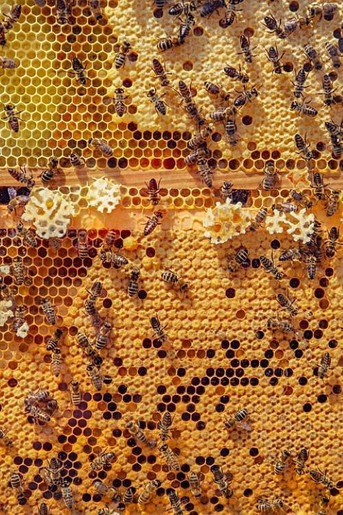 le caratteristiche delle api